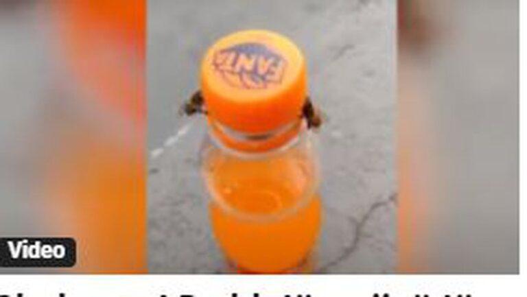 Dy bletë arrijnë të hapin kapakun e shishes, inteligjenca e tyre mahnit shikuesit (VIDEO)
