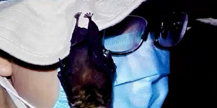 Dalin pamje nga laboratori i Wuhan, lakuriqë nate të gjallë të mbyllur në kafaz (Video)