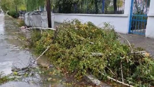 Pemë të thyera dhe stola të dëmtuar, çfarë la pas stuhia e reshjeve të shiut në Korçë